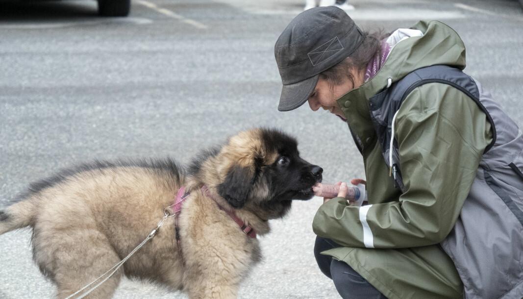 PERFEKT DUO: Leonbergervalpen Dog-Otto og eier Ida Ose var to av deltakerne som deltok på valpekurs mandag ettermiddag.